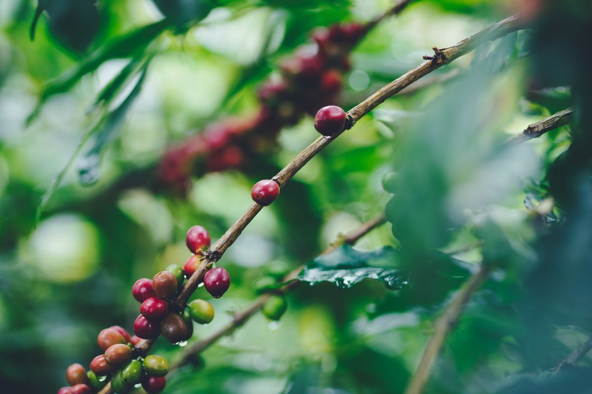 {Coffee Island}-31